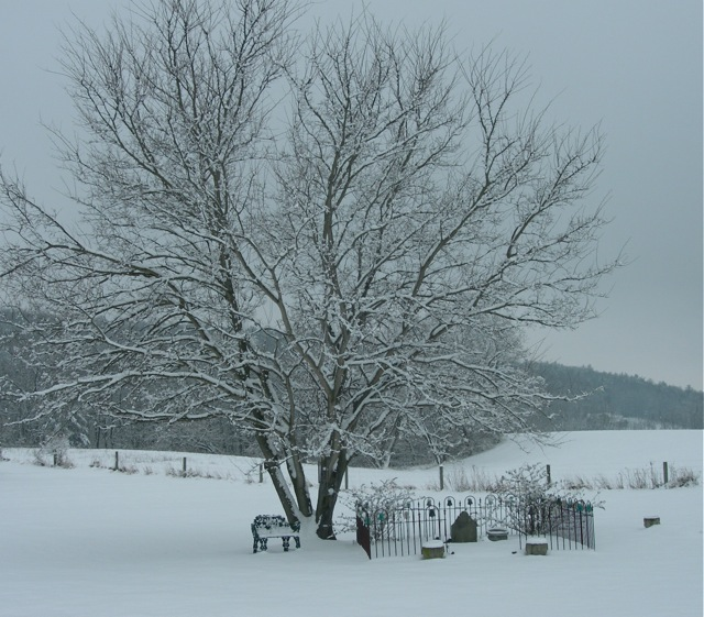 Daniel Peifer resting under his snow-decorated mulberry tree.