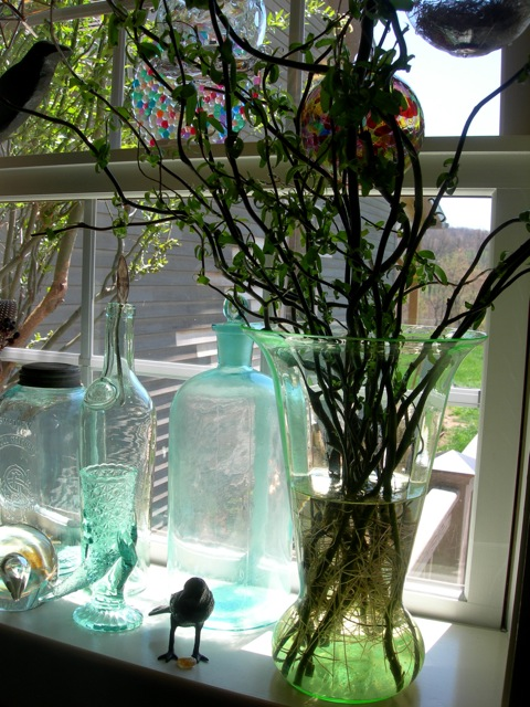 I'm rooting some curly willow cuttings in the kitchen window. You can see the curly willow tree outside. I planted it much too close to the house!