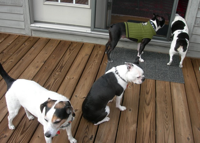 Whoever said that herding cats is impossible hasn't tried to photograph all four of these dogs!