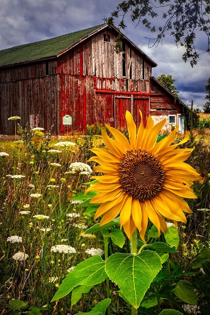 Barn Meadow Flowers, a photograph by Debra and Dave Vanderlaan of Celebrate Life Gallery.