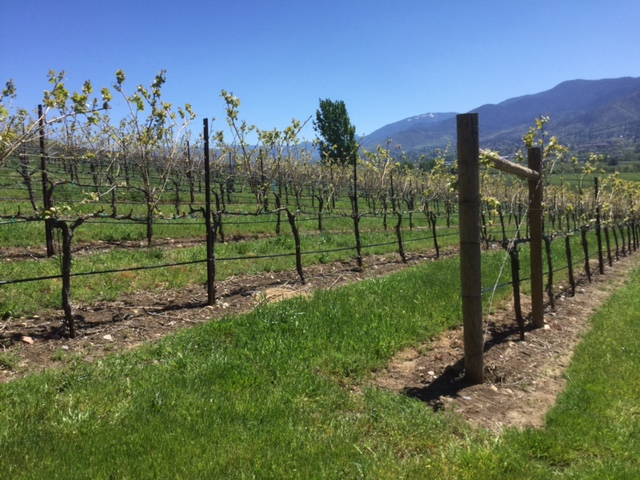 I love to see the organized rows of grape vines. Oregon's climate makes for some delicious grapes and wines made from them.