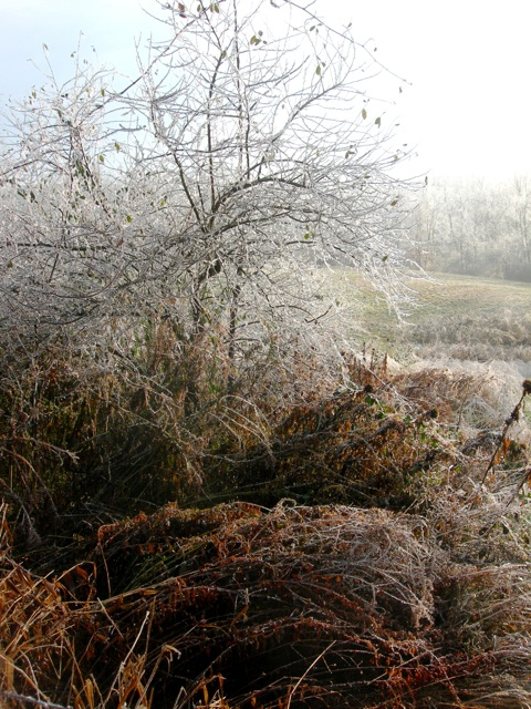 Early morning ice and mist.