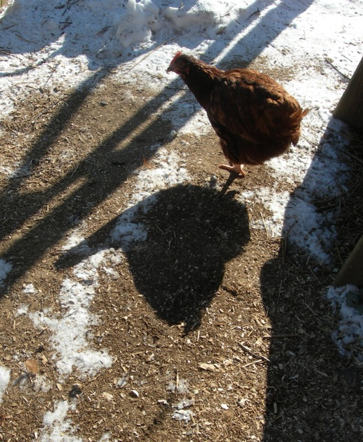 Charlotte saw her shadow, but she wasn't frightened at all.