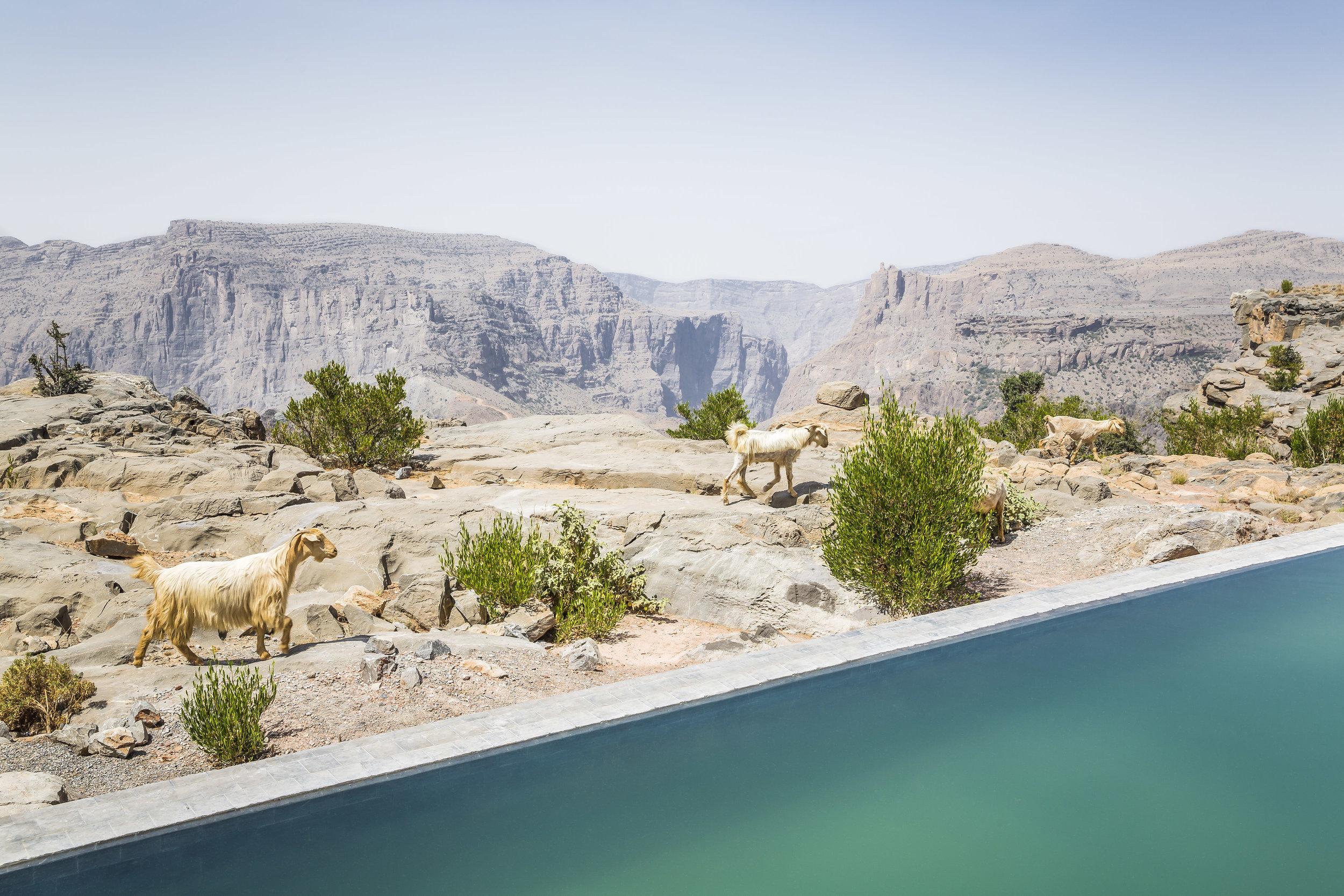 Anantara Al Jabal Al Akhdar Resort - Cliff Pool Villa Pool View 02.jpg