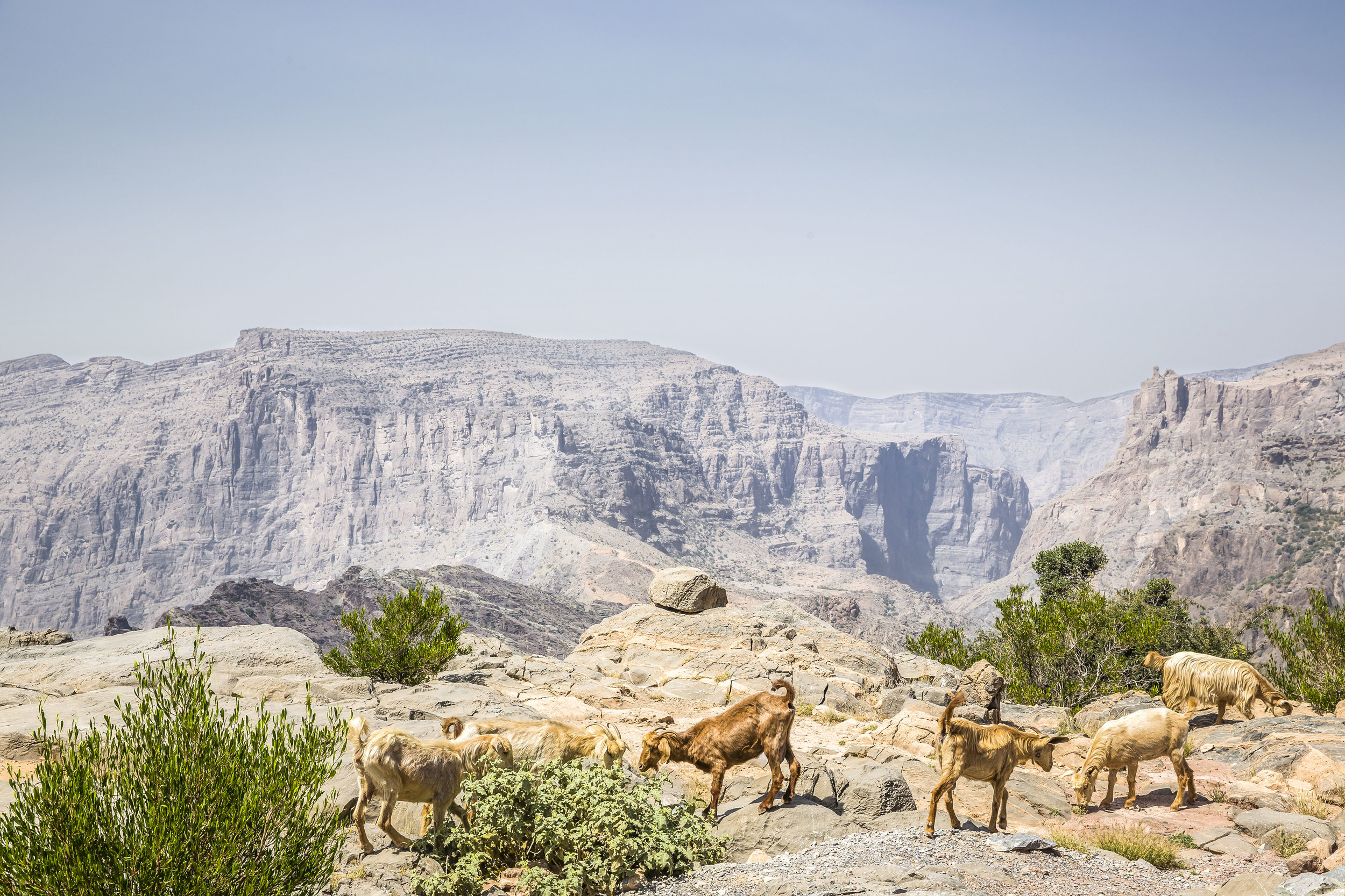 Anantara Al Jabal Al Akhdar Resort - Cliff Pool Villa View 01.jpg