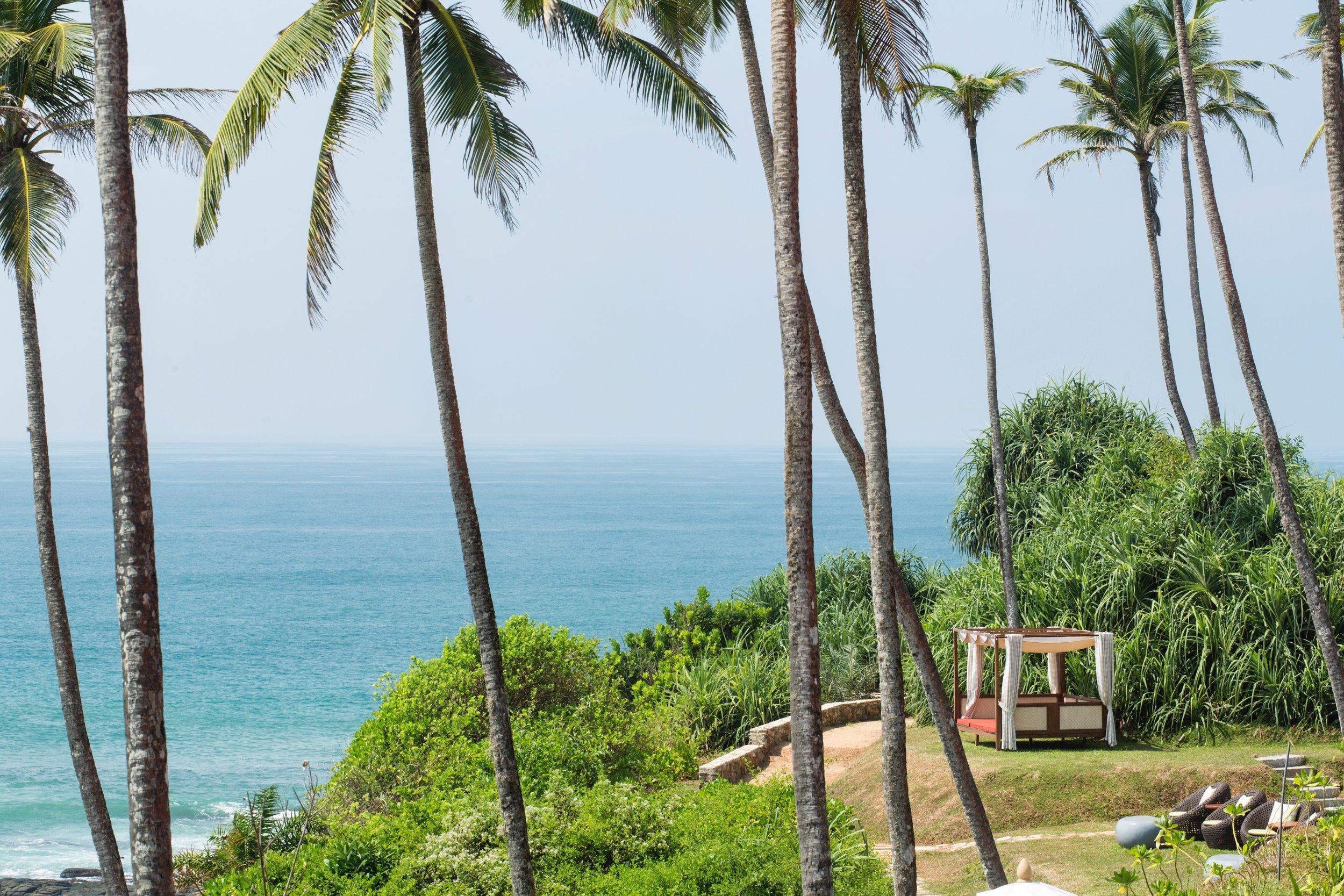 coconut palms _ ocean 3.jpg