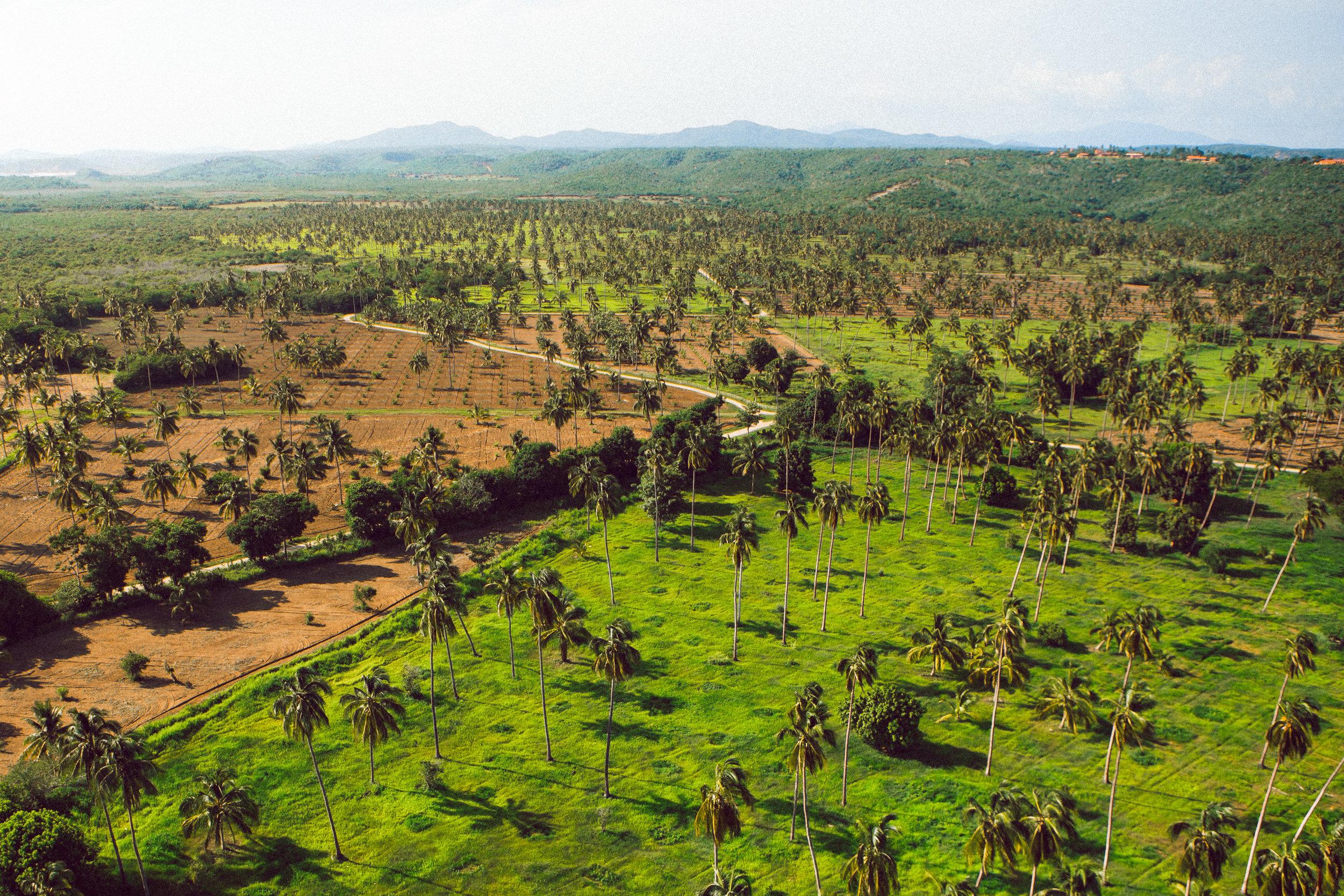 Image result for cuixmala biodynamic farming