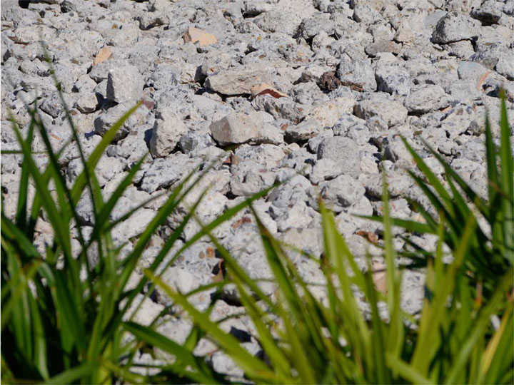 Raw, robust, recycled concrete used as mulch. Mmmm.