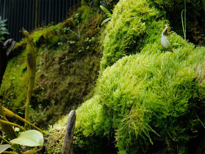 You should by now be aware of my obsession with all things mossy. If I ever met Kate she'd be in trouble...