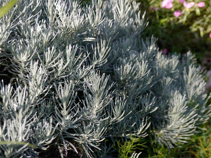 I love plants that look deceptively spiky but have sneakily soft foliage.