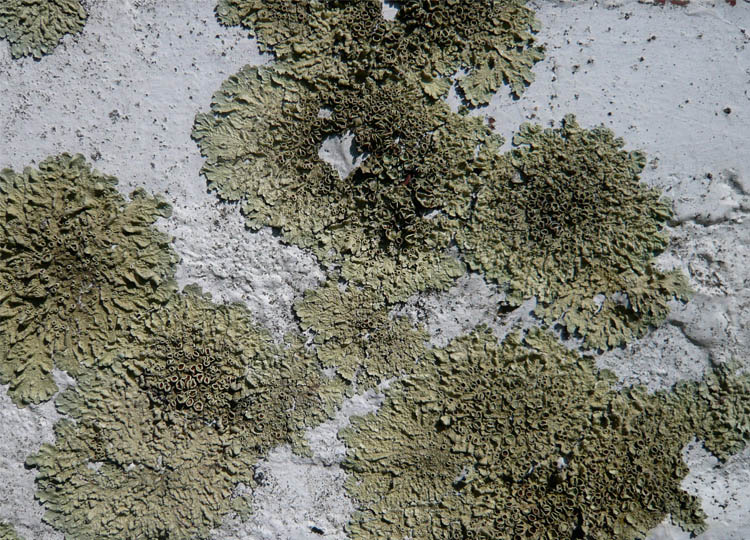 I'm lichen it. The patina of weathered surfaces...garden art available to everyone for free.