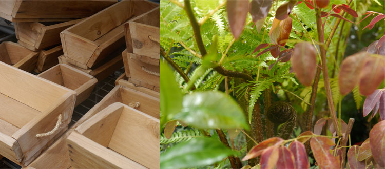 Garden accessories include these little timber herb planters and a range of pots.