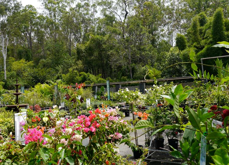 The nursery in its eucalypt setting.