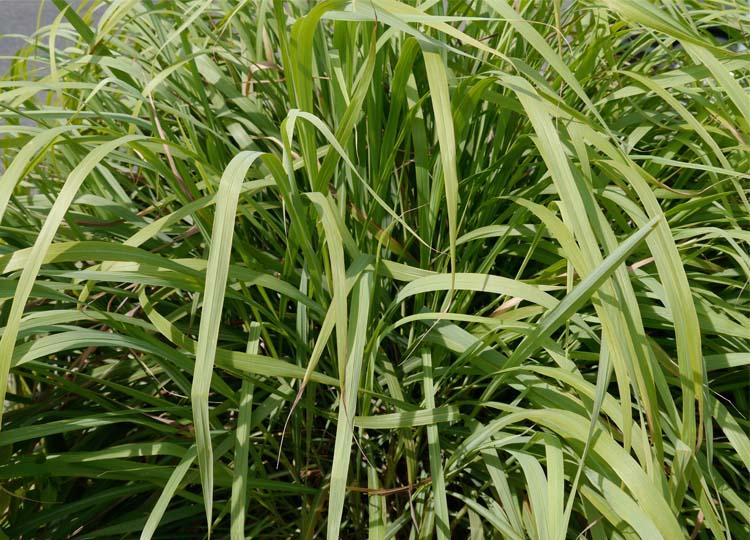 Landscapology_Yamba16.jpg