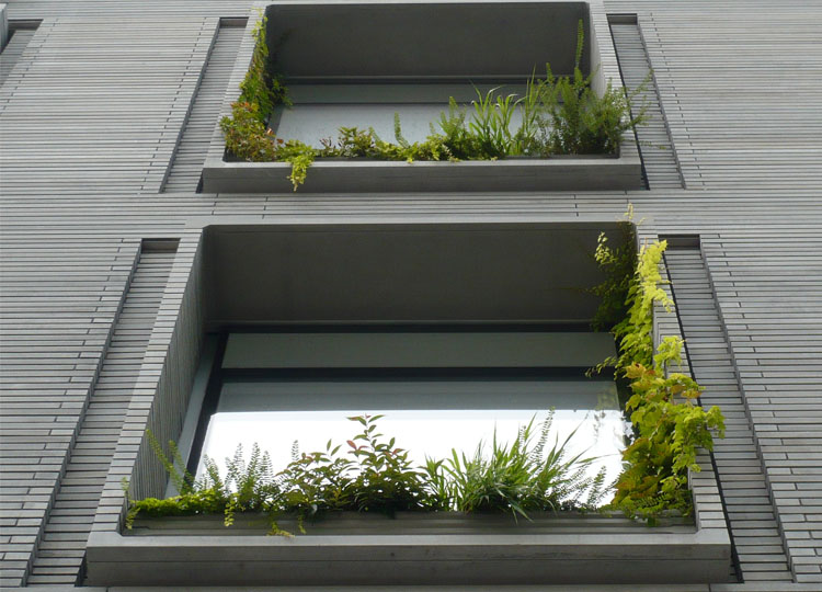 Plants can run across, around and over these window boxes and frames. Even in a small space there is a variety of colour, texture and form.