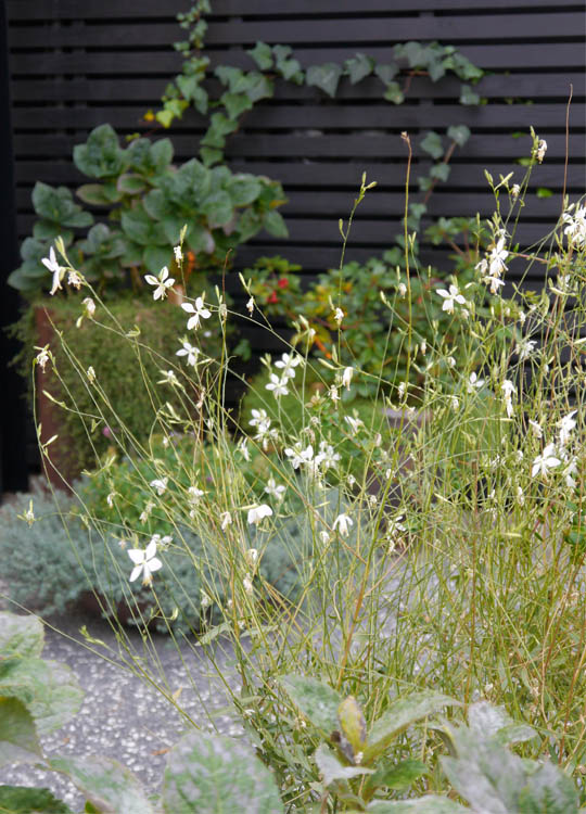 Using plants that naturally spread beyond the dimensions of the planters themselves makes the garden seem bigger.