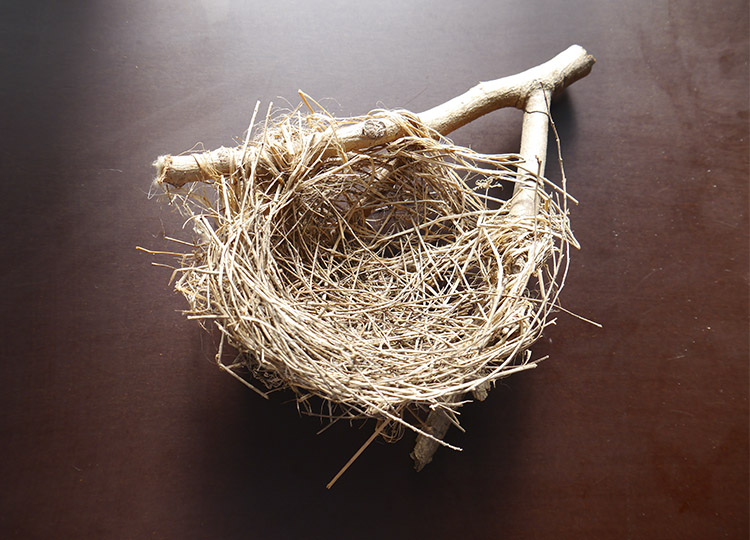 Landscapology_Nest1.jpg