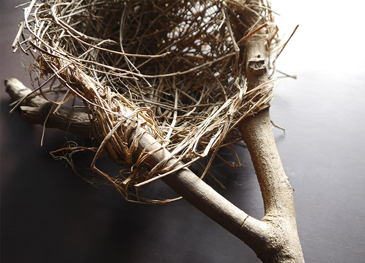 Landscapology_Nest4.jpg