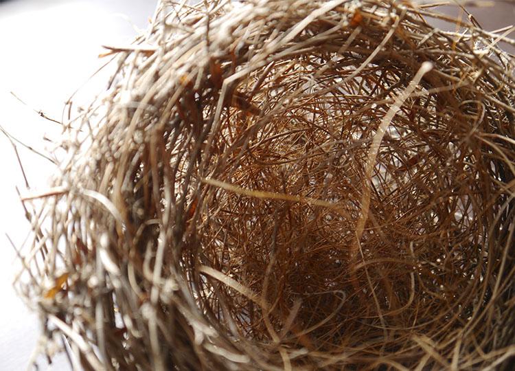 Landscapology_Nest6.jpg