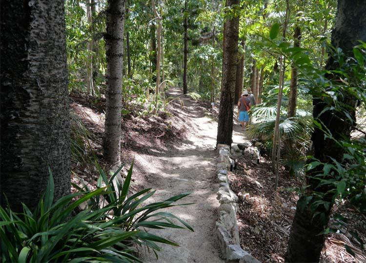 10. 100 Hidden Hoop Pines: the Brisbane Quaker Arboretum