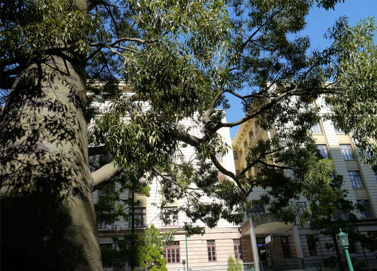 13. Rediscovering Brisbane' Anzac Square