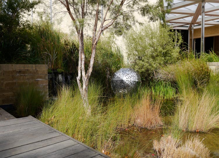 16. Swinging with the Sedges: Perth's Urban Wetland