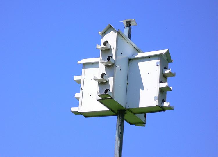 30. Nest Boxes for Rare Martins
