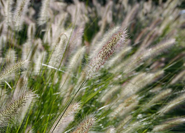Landscapology_Grass18.jpg