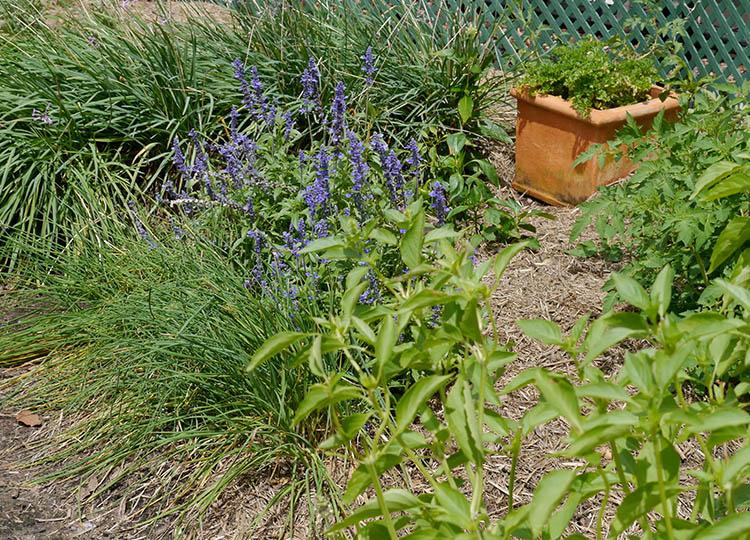 Landscapology_Kitchen13.jpg