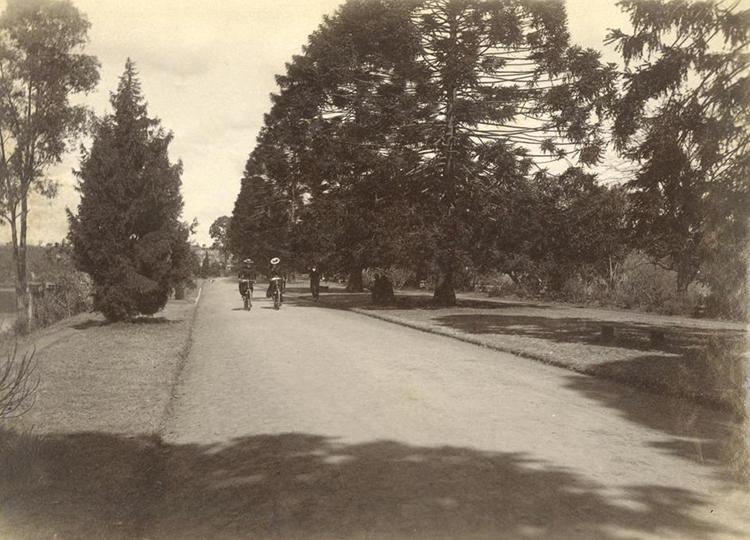 Cycling through the City Botanic Gardens, 1896.