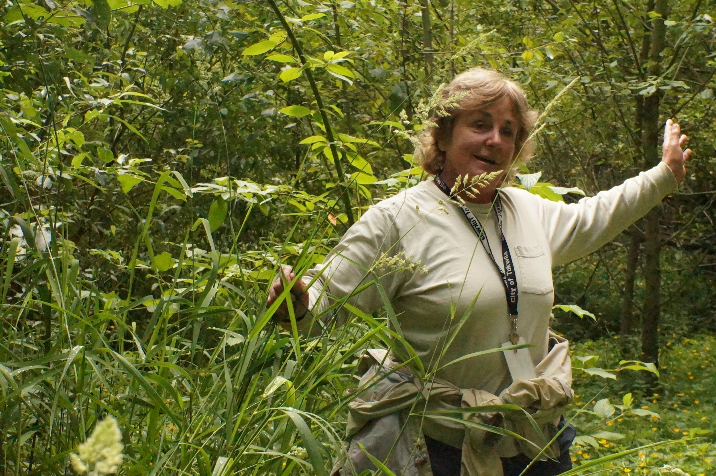 Sandra Whiting teaches us about noxious reed canary grass / Phalaris arundinacea.