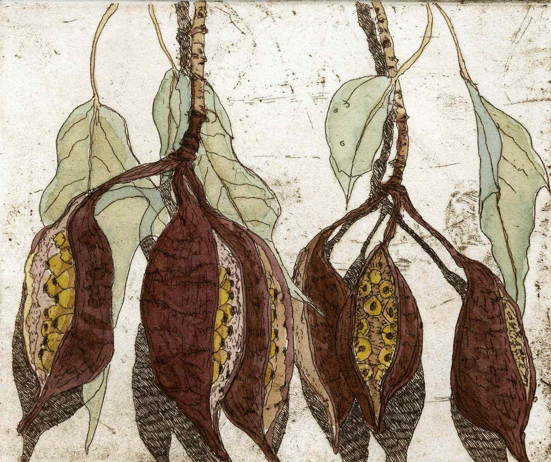 13. Helen Clarke,  Desert Kurrajong , hand coloured etching, $240