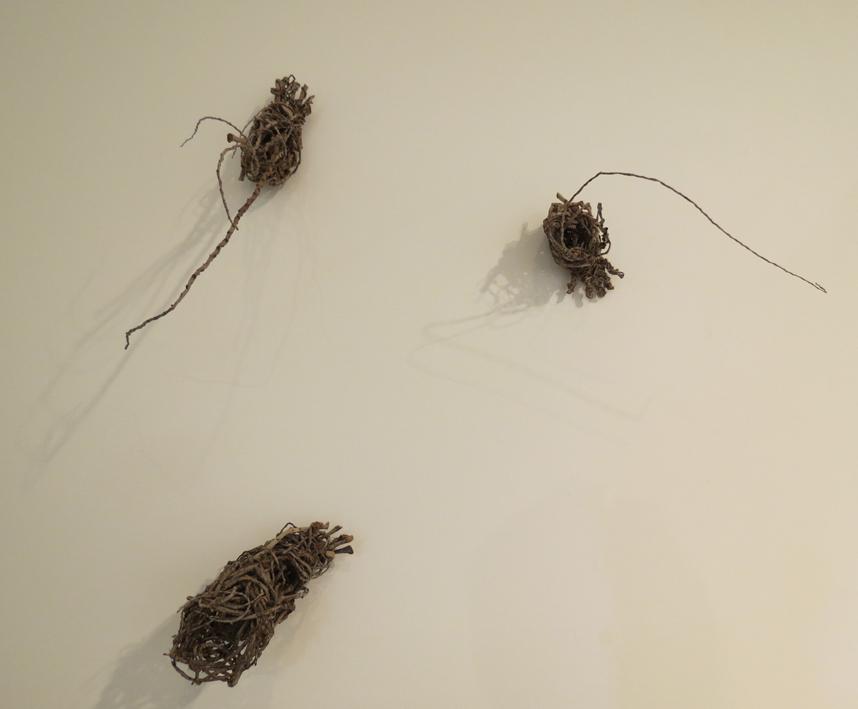 21. Cathy Rankin, Bush Feet, palm (inflorescence), $75 set of 3