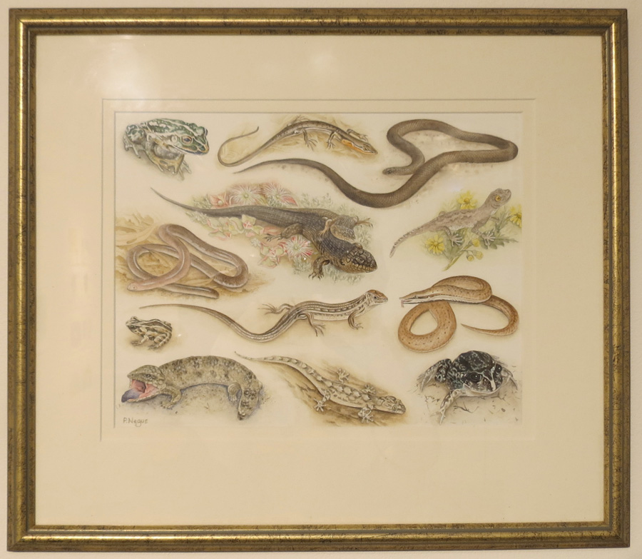 64.  Snakes and Lizards  by Patricia Negus, watercolour, $550