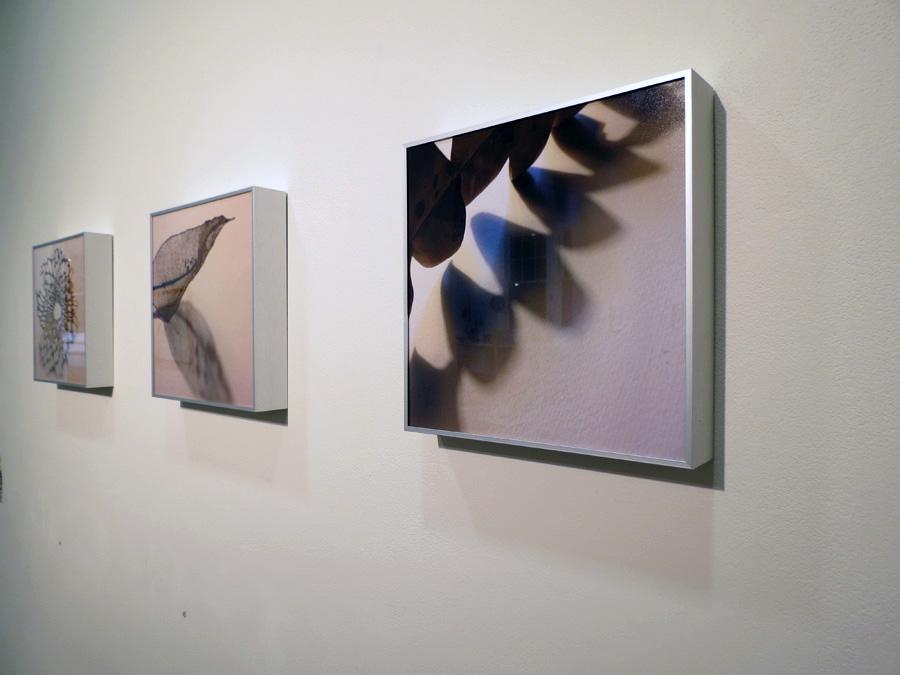 44-46. 'Shadow' series, Sarah Thornton-Smith, photo print in aluminium frame, $160 each