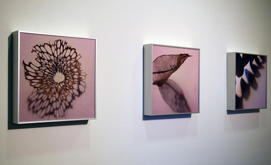 46-44. 'Shadow' series, Sarah Thornton-Smith, photo print in aluminium frame, $160 each