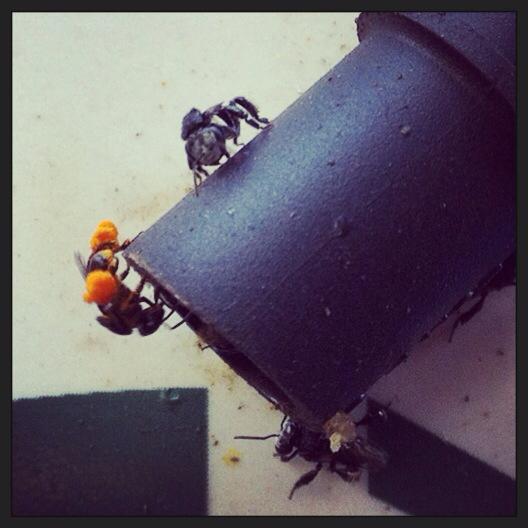 bees at entrance.jpg