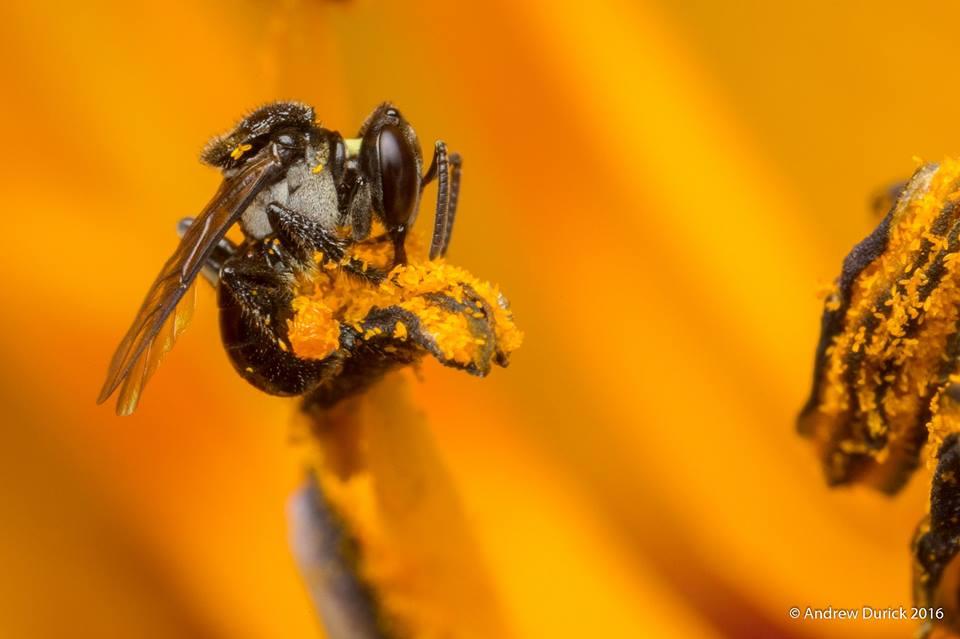bee yourself.jpg