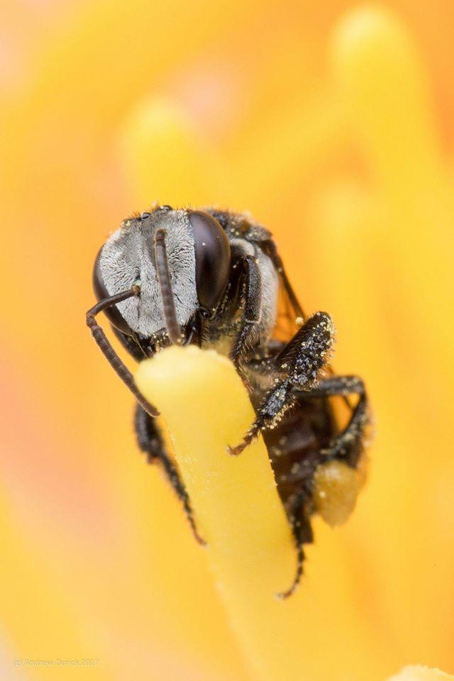 yellow pollen.jpg
