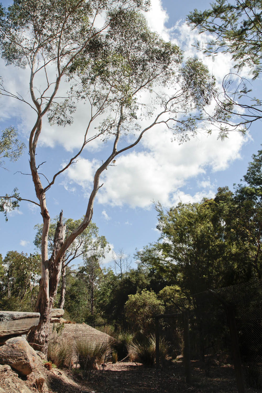 20130105australia203lr