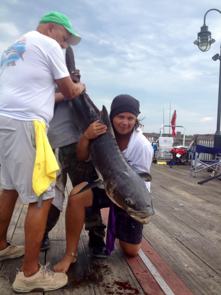 "60"" 72lb Cobia caught at Buckroe Fishing Pier"
