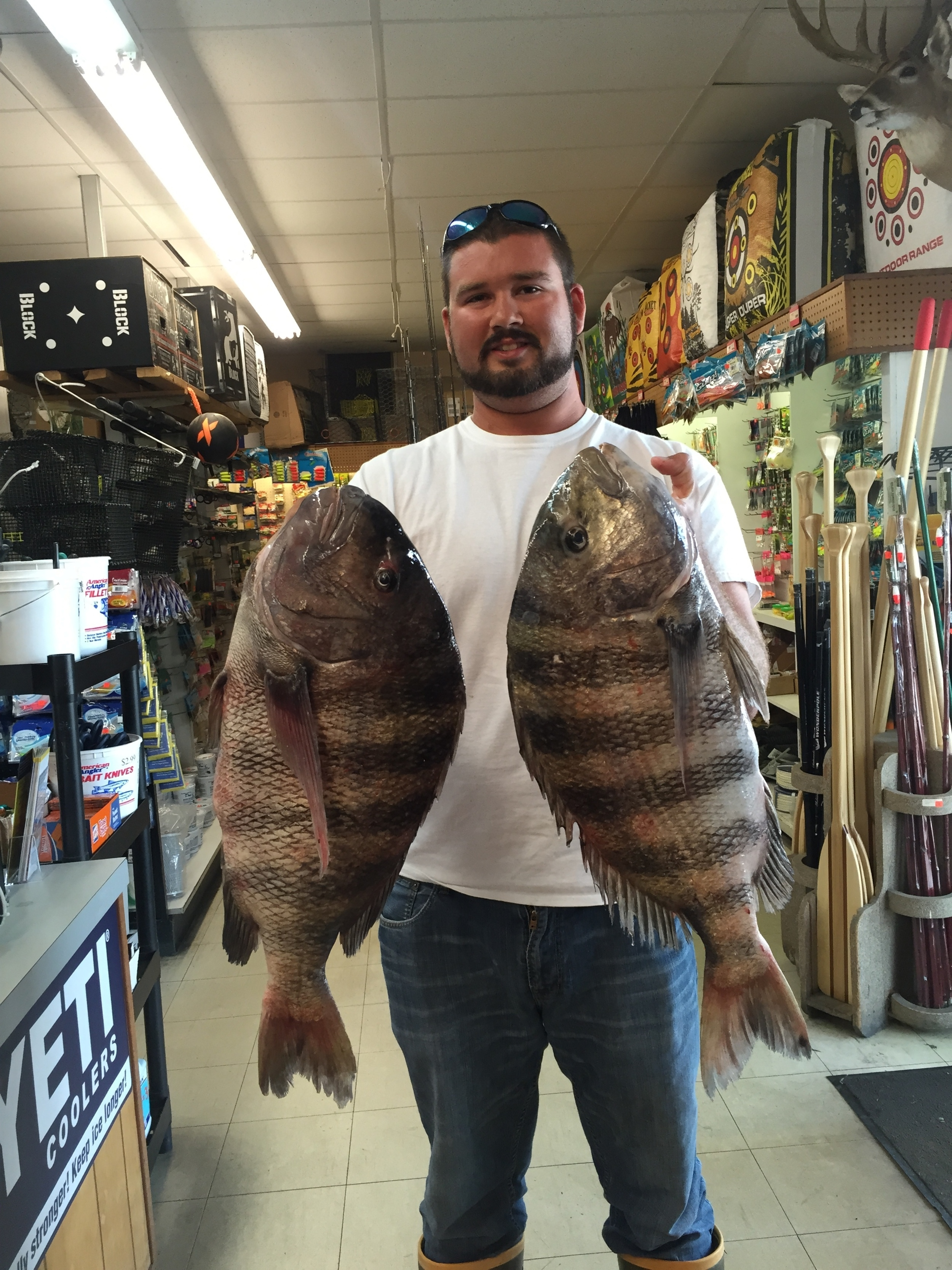 Hunter Southall caught 3 citation Sheephead on 13 Sep 2015 at CBBT. The 2 largest weighting 10.10 and the smallest weighing 10.6. Thanks for bringing them in.