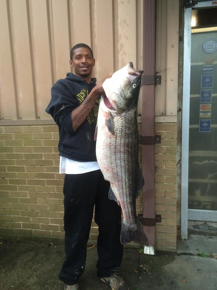 Another big rockfish caught right here in the James River! Congrats Jeff Dorsey on this 51 pounder caught off the Green Mile Pier.  — with  Mike Smith .