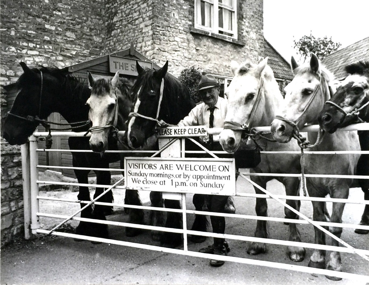 Rescued Pit Ponies photographed as they are brought to Staunton Manor, kindly provided by Horseworld who continue their charitable work in land and buildings nearby.