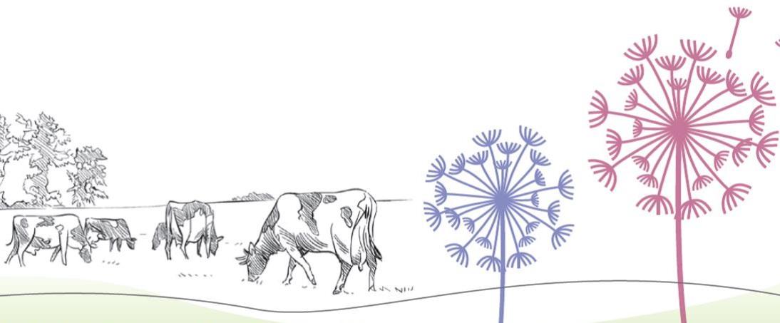 cow+footer.jpg
