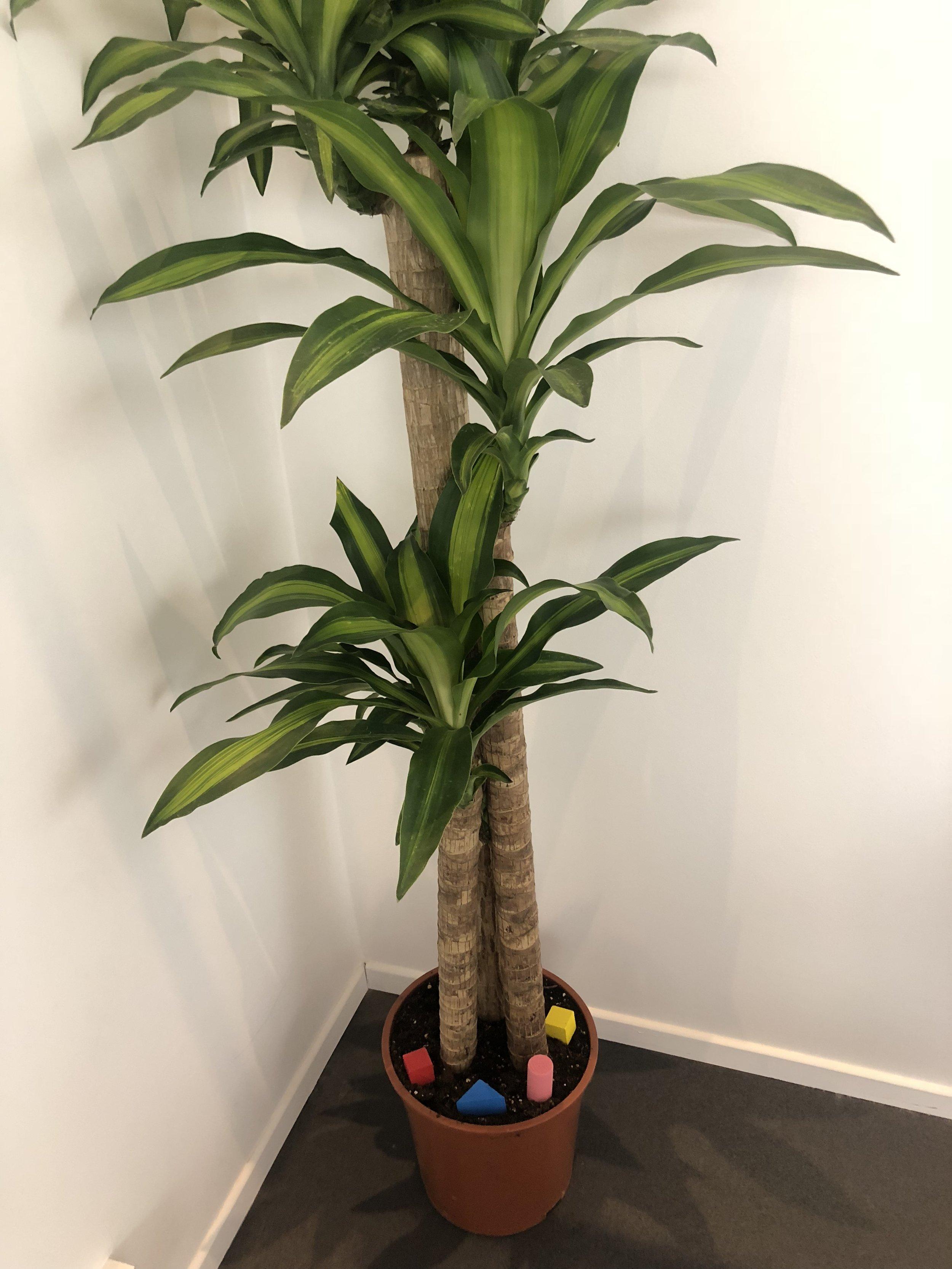 Very heavy plant