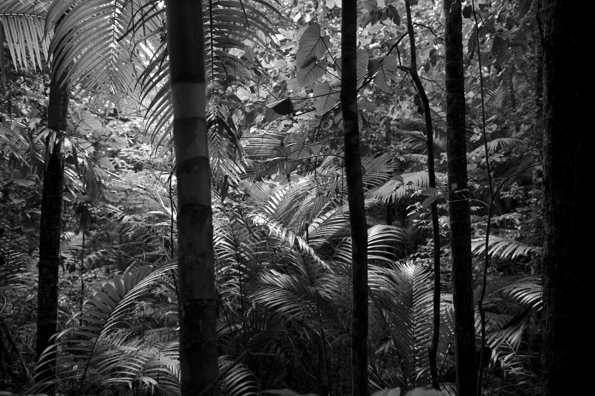 Rainforest, Tobago 2013