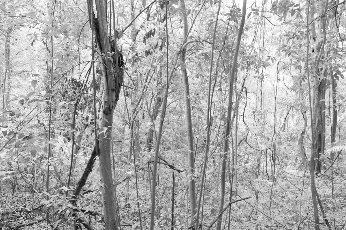 Rainforest, Tobago 2012
