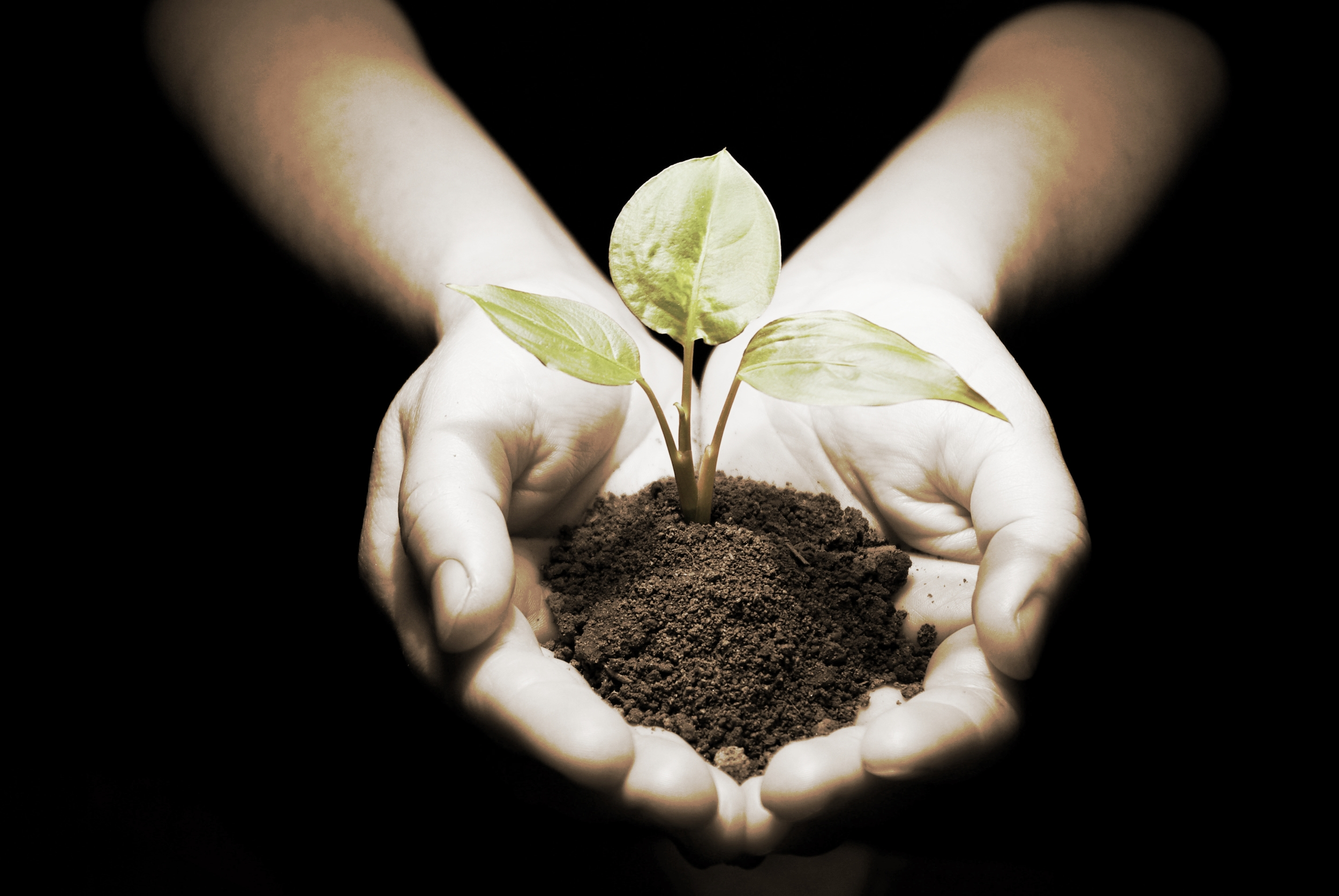 hands-with-plant-dirt4.jpg