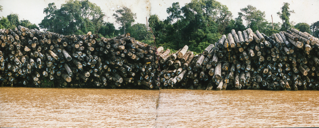 Stacks of dead trees, waiting to be shipped to Asian markets, formed an unbroken wall that stretched for tens of kilometers on both sides of the river; the ancient homeland of the Penan about to become disposable chopsticks and concrete forms in Japan.